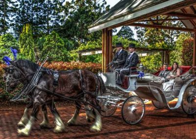 mt tamborine weddings (1 of 1)