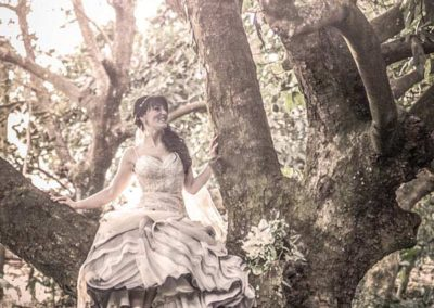 weddings pethers rainforest