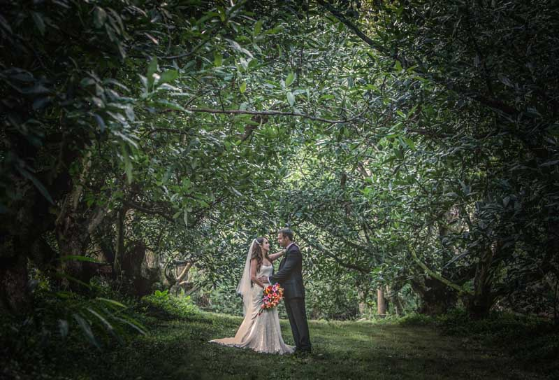 Weddings Pethers Rainforest Retreat